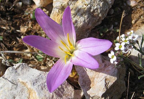 Balade Botanique UMTL Martigues
